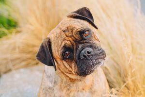 Otis the Rescue Dog
