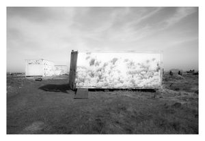 Dungeness #10