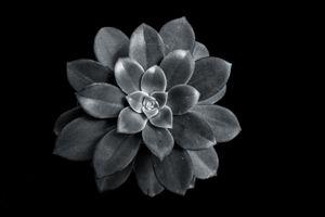 Succulent Series #2