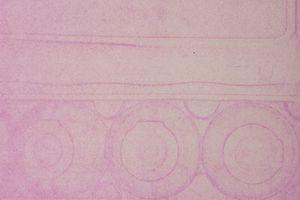 Anthotype