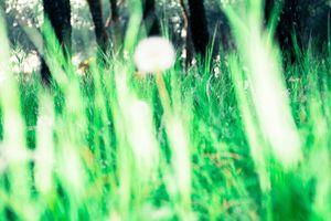 Metanaturaleza, A ras de suelo
