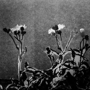 A Herbarium