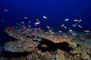 60 m depth