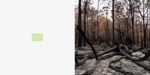Forest or scrub, dense.