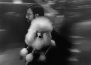 Petrified poodle
