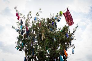 Se adornarán los árboles del cortamonte con regalos y prendas de vestir, que serán recogidas cuando caiga el árbol en la fiesta.
