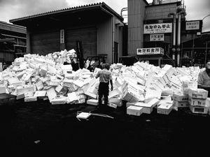 Toyosu Market, Tokyo