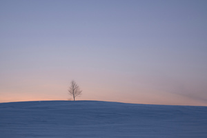 Winter Horizon in the Vicinity -12