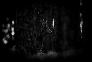 Deep dark forest 7