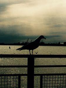 Fly away birdy!