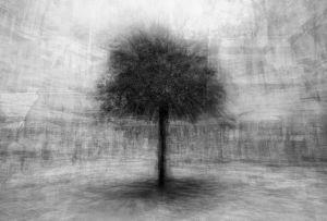 stadtbaum#4