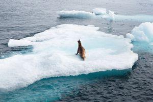 Seal, David strait