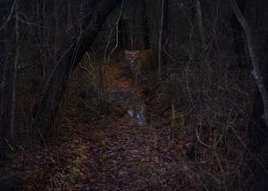 Camouflage & Aposematism