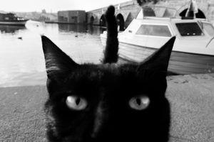 stray cat-10