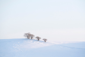Winter Horizon in the Vicinity -09