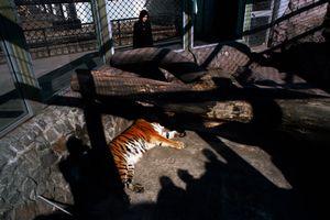 At the Leningrad Zoo, St. Petersburg, Russia, April 2006
