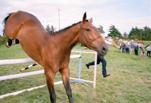 """Lunging Crosmolina, Agricultural Show. From the exhibition """"Landscapes"""" © Tom Wood"""