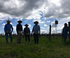 Workers pose in the vineyard.