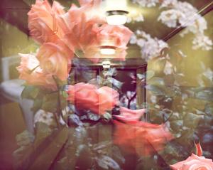 [Games # 11] – Corridor with Rose bush detail, Dennison Point/Doran Walk, London 2012