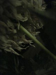 NS 0441- Night Shading