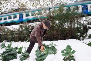 During the winter is possible that the harvest frost, the farmers have to take care of it