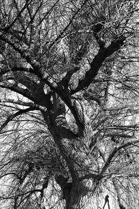 I had a dream and I talked with a tree