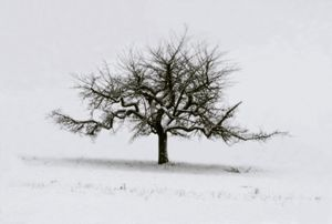 Pommier, Suisse, Portraits of Trees