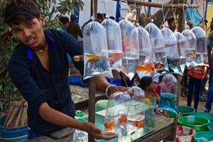 goldfish merchant, Calcutta (Kolkata), India