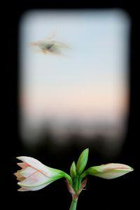 Evergreen Window                                      © Olivia Parker, 2012