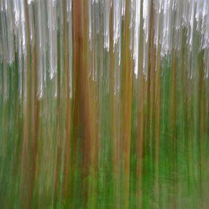 Eucalyptus (vibrations) © Alfred Tom