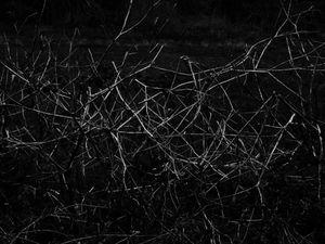 constellations-invasives-08.jpg