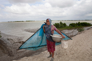 A woman catches small fishes with net at Shyamnagar in Satkhira distict, Bangladesh. Thousands of men and women go into the Sundarbans forest in Southern Bangladesh every day to gather honey, collect firewood, or catch fish, crabs and putting themselves at great risk for a tiger attack.