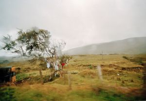 """May Day Bush. From the exhibition """"Landscapes"""" © Tom Wood"""