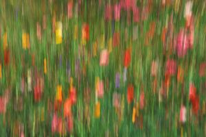 Summer Garden Abstract