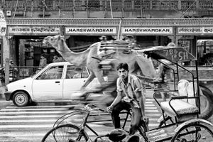 The Rickshaw Driver - Jaipur, India
