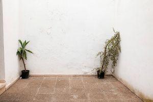 Two Plants in a courtyard, Sevilla.