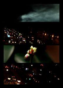 N°96 - Nuit - Maestro - 2010.