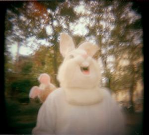 forsyth bunnies