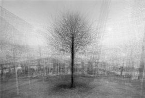 stadtbaum#8