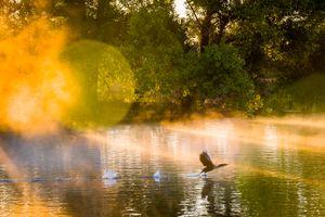 Dawn Patrol in Sepulveda Basin Wildlife Reserve