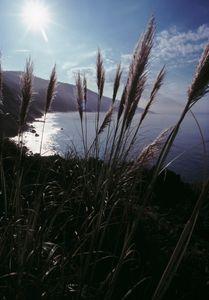 Pampas grass and shoreline w sun