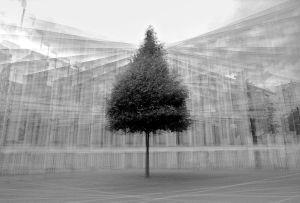 stadtbaum#15
