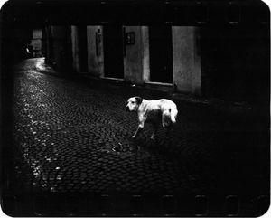 """""""Untitled"""" (Three Legged Dog), 2005 © Giacomo Brunelli"""