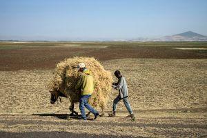 Etiopia 2017  paesaggio contadino