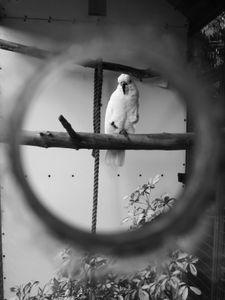 Parrot through a Window Pane