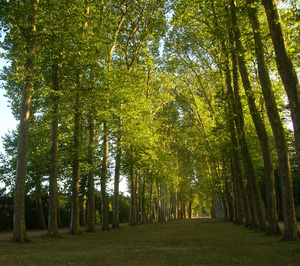 Forestry Parks	Versailles, France