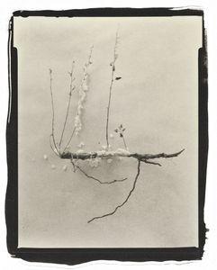Botanical Specimen with Salt (Wildflower No. 3) © Claire A. Warden