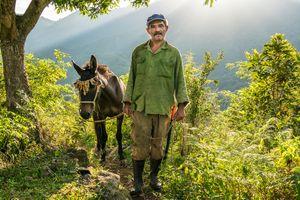 Farmer with a mule