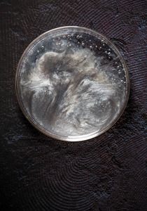 Petri Nebula 283.3