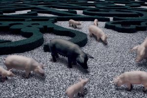 "Pigs, From The Series ""Sacrifice""@ DongwookLee, 2009"